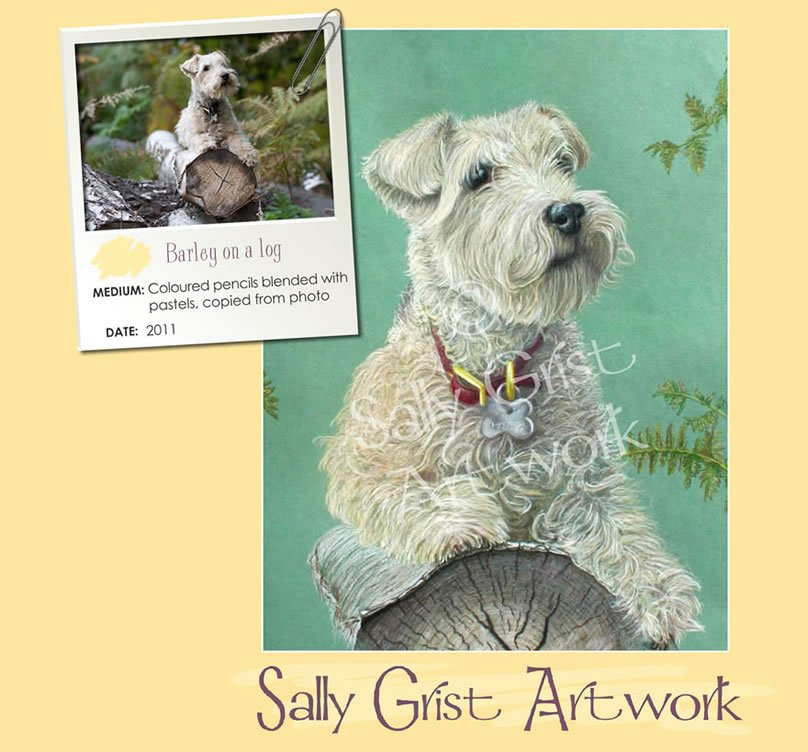 pet portrait, pet portrait Artist Sally Grist